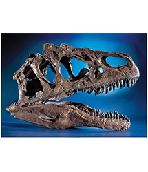 Fossils and Dinosauria